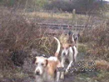 Some hounds were called back from railway tracks by hunt saboteurs