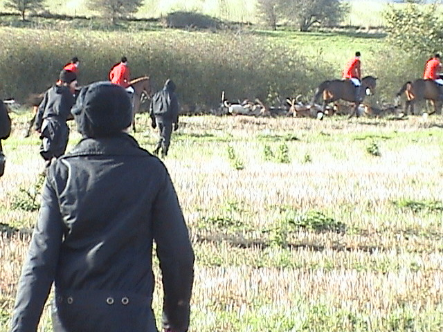 Hunt Saboteurs saving lives!!