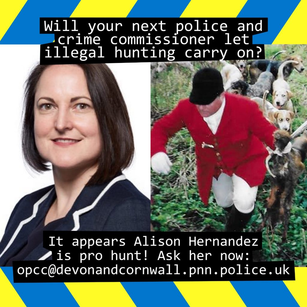 Alison Hernandez currently holds the role of PCC and is running again