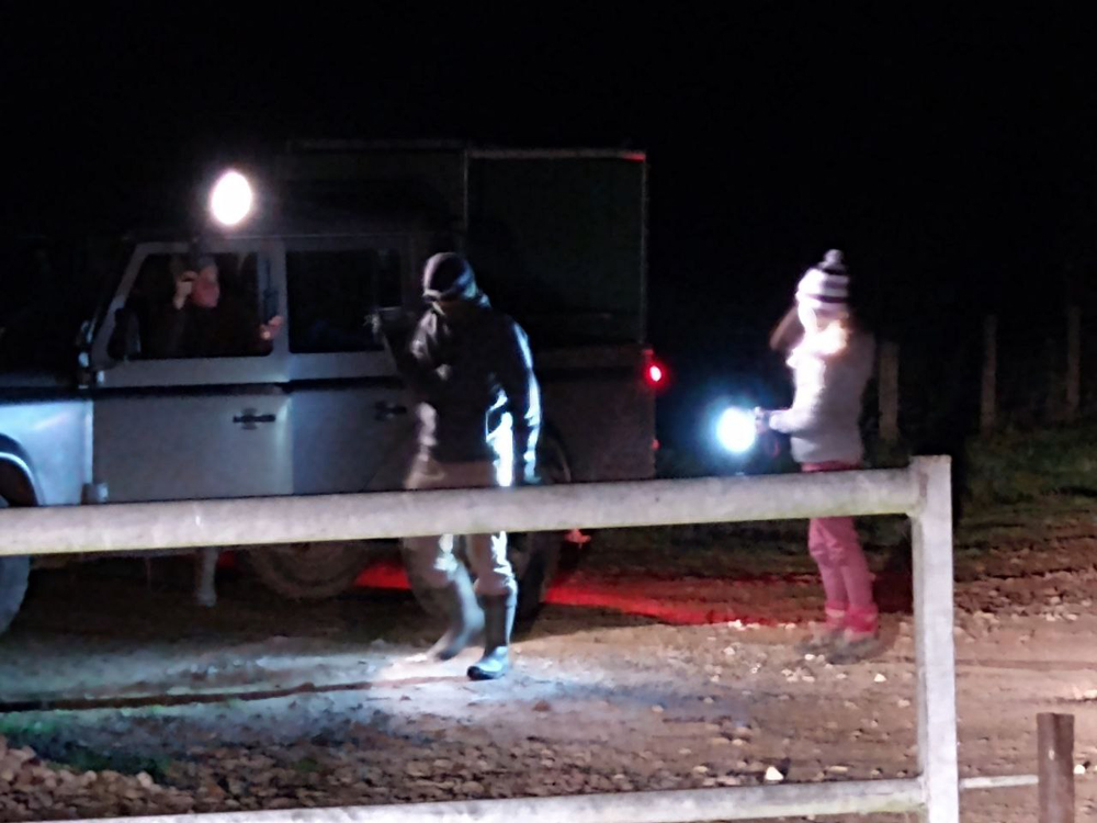 Sabs shine a light on cruelty, badger cull 2020.