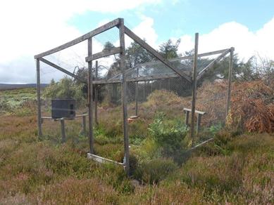 Ladder Trap (image courtesy of Hunt Investigation Team)