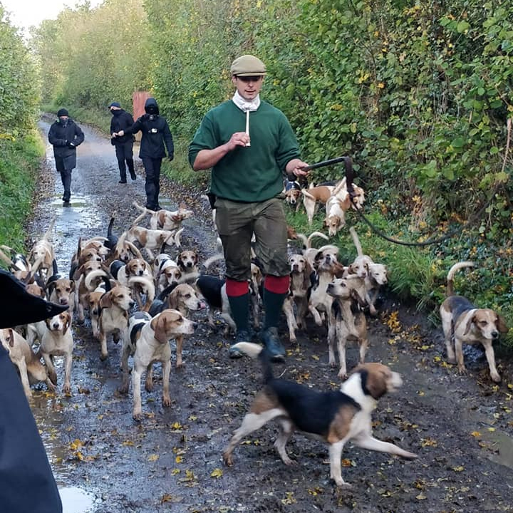 Hare hunters sent packing by sabs