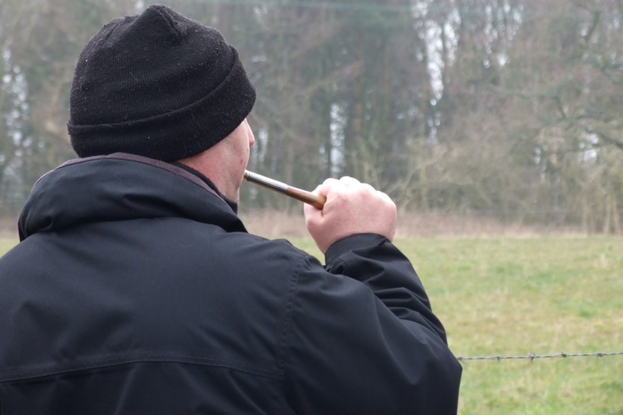 Hunt saboteur calls hounds away from the fox, UK.
