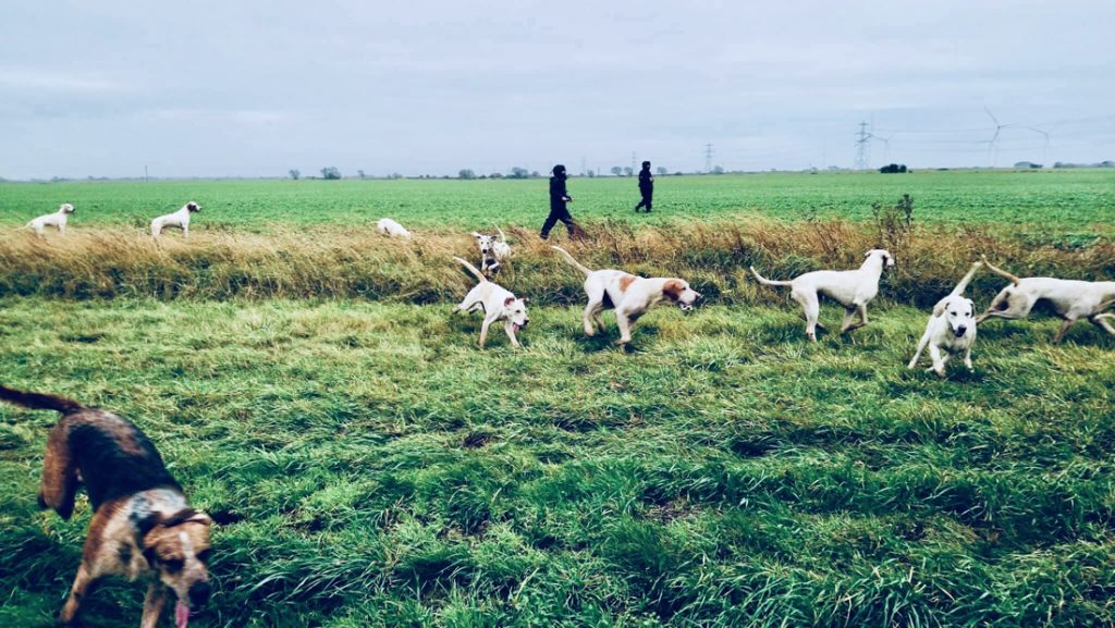 Funded by you: hunt sabs take control of the hounds.