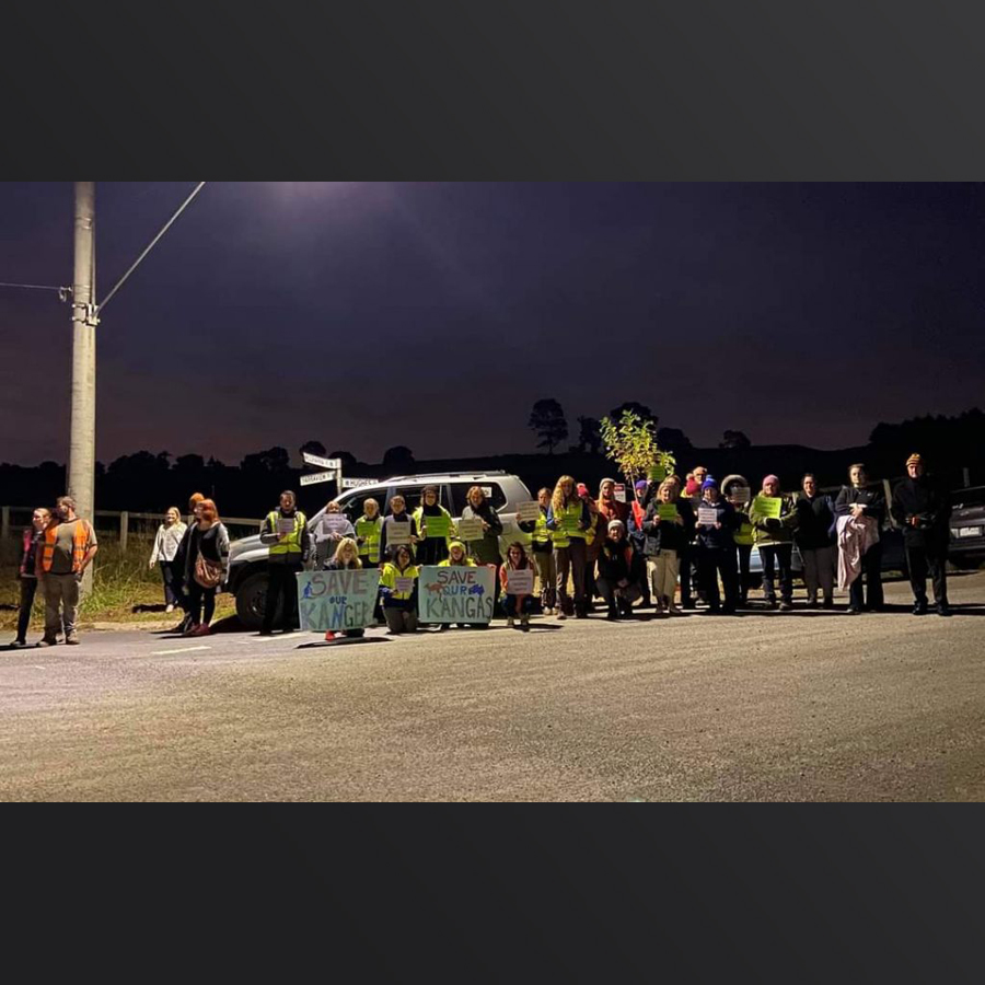 protest to protect kangaroos