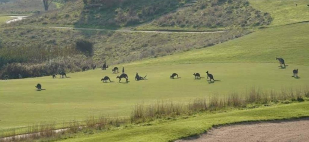 Kangaroos want to live in peace.